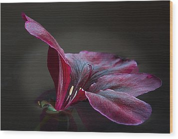 Wood Print featuring the photograph Deep Velvet by Shirley Mitchell
