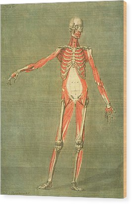 Deeper Muscular System Of The Front Wood Print by Arnauld Eloi Gautier D'Agoty