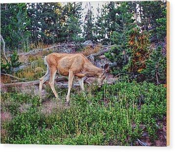 Wood Print featuring the photograph Deer 1 by Dawn Eshelman