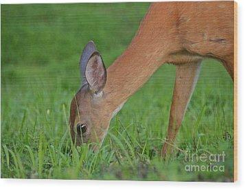 Deer 25 Wood Print