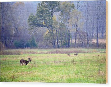 Wood Print featuring the photograph Deer At Cades Cove by Kenny Francis
