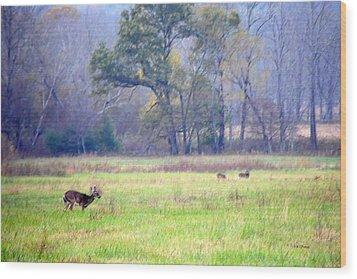 Deer At Cades Cove Wood Print by Kenny Francis