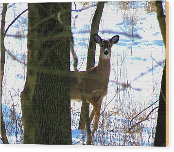 Wood Print featuring the photograph Deer At Park by Eric Switzer