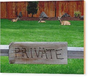 Deer At Rest Wood Print