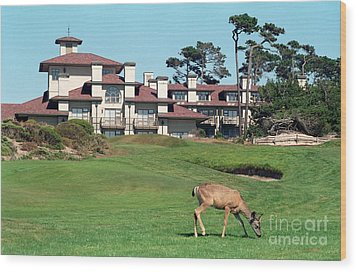 Deer At Spanish Bay Wood Print