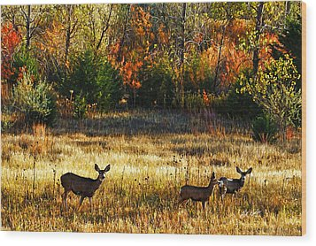 Deer Autumn Wood Print by Bill Kesler