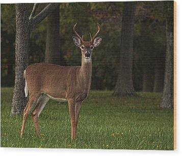 Wood Print featuring the photograph Deer In Headlight Look by Tammy Espino
