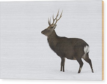 Deer In Snow Wood Print