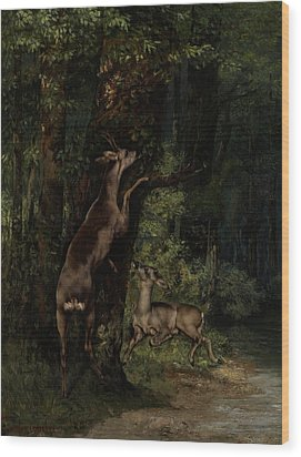 Deer In The Forest Wood Print by Gustave Courbet