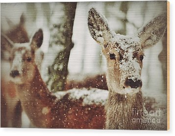 Wood Print featuring the photograph Deer In The Snow by Nick  Biemans