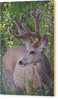 Buck In The Woods Wood Print by Athena Mckinzie