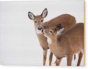 Deer Kisses Wood Print