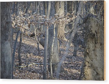 Wood Print featuring the photograph Deer by Michael Donahue
