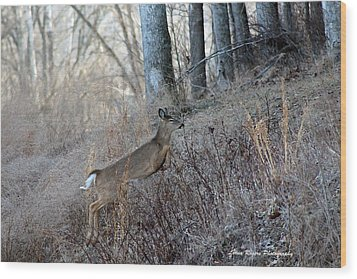 Deer Moving Upward Wood Print by Lorna Rogers Photography