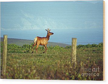Deer On The Rune Wood Print