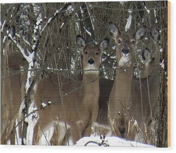 Deer Posing For Picture Wood Print
