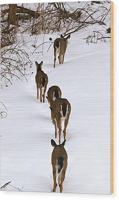 Deer Trail Wood Print