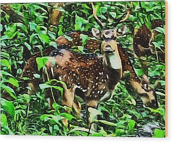 Deer's Green Day Wood Print