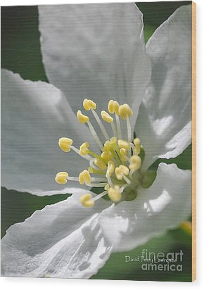 Delcate Widflower With Beautiful Stamen Wood Print by David Perry Lawrence