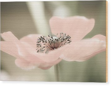 Delicate Anemone Wood Print by Julie Palencia