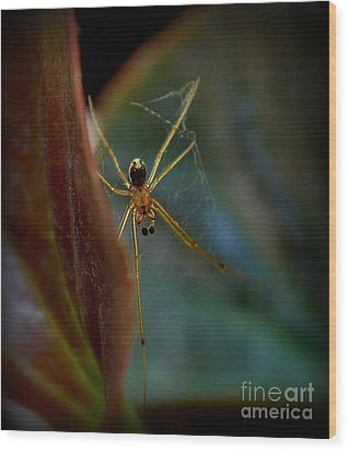Wood Print featuring the photograph Delicate  Constructor by Marija Djedovic