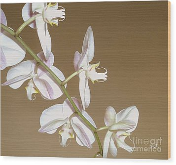 Wood Print featuring the photograph Delicate Display by Geri Glavis