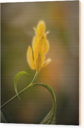 Delicate Fountain Of Gold Wood Print by Mike Reid