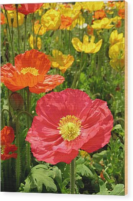 Delicate Fowers Wood Print by Pat Knieff