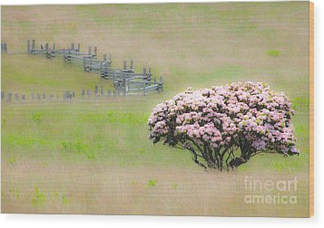 Delicate Meadow - A Tranquil Moments Landscape Wood Print by Dan Carmichael