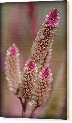 Wood Print featuring the photograph Delicate Pink by Amanda Vouglas
