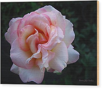 Wood Print featuring the photograph Delicate Pink by Joyce Dickens