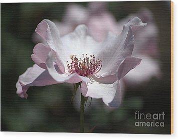 Delicate Pink Wood Print by Sharon Elliott