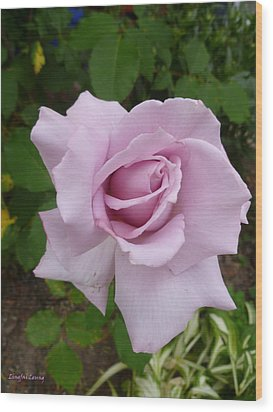 Wood Print featuring the photograph Delicate Purple Rose by Lingfai Leung