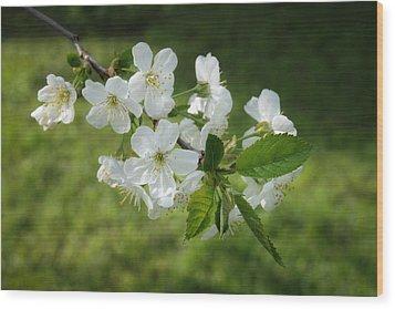 Delicate Springtime Wood Print by Ari Salmela
