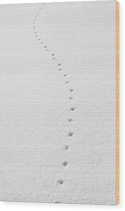 Delicate Tracks In The Snow Wood Print