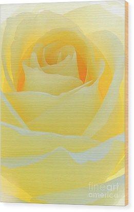 Delicate Yellow Rose Wood Print by Sabrina L Ryan