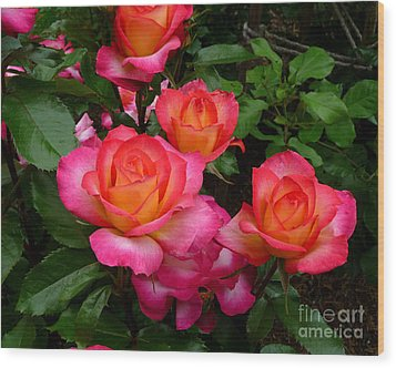 Delicious Summer Roses Wood Print by Richard Donin
