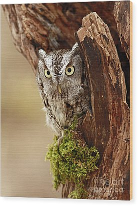 Delighted By The Eastern Screech Owl Wood Print by Inspired Nature Photography Fine Art Photography