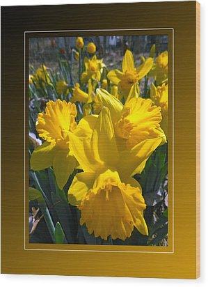 Delightful Daffodils Wood Print by Patricia Keller