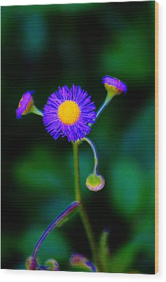 Delightful Flower Wood Print