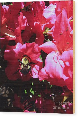 Wood Print featuring the photograph Delving Into Sweetness by Robyn King