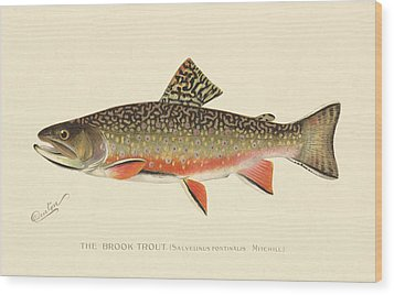 Denton Brook Trout Wood Print by Gary Grayson