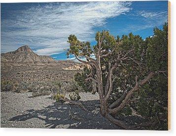 Desert Beauty Wood Print by Jen Morrison