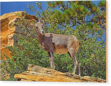 Desert Bighorn Sheep Wood Print by Greg Norrell