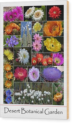 Desert Botanical Garden Wood Print by Cindy McDaniel