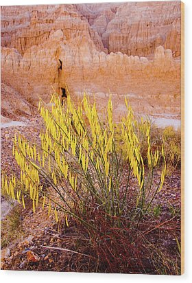 Desert Flower Wood Print