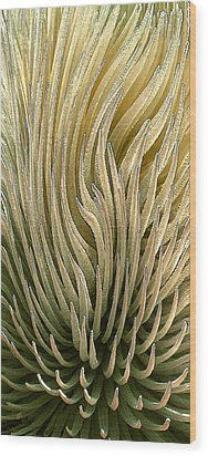 Desert Green Wood Print by Ben and Raisa Gertsberg