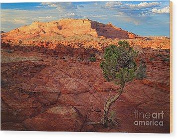 Desert Juniper Wood Print by Inge Johnsson