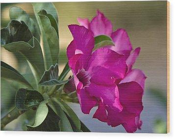 Desert Rose  Wood Print by Saija  Lehtonen