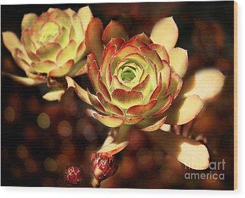 Desert Roses Wood Print by Ellen Cotton